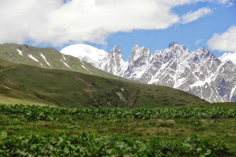 W tle Uszba (Ushba) Gruzja, Kaukaz,